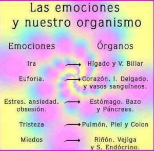 LAS EMOCIONES Y LOS ORGANOS