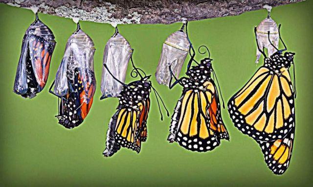capullo-mariposa